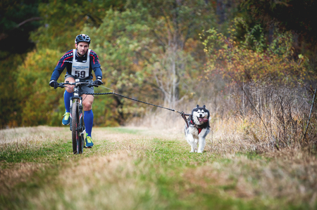 GERMANY, Oberndorf, Geslau - NOVEMBER 3, 2018: Sled Dog Pulling the Bike with Man, Mushing Off Snow Crosscountry Races in Typical Autumnal Weather. Noisy Photo.