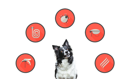 Portrait of a dog with flat design icons of parazites around its head. Cute Black and White Border Collie.