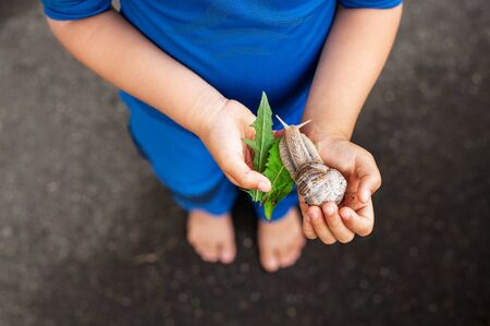 Young boy holding active snail in hands and feeding it with leaves. The relationship between people and nature.