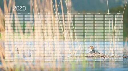 Yearly Wall Calendar Planner Template for Year 2020. Great crested grebe sitting on eggs in nest. Podiceps cristatus. Wildlife photography with blurred mountains on background.