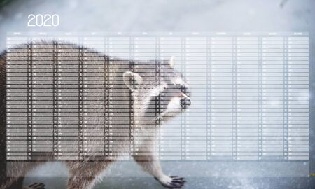 Yearly Wall Calendar Planner Template for Year 2020. Portrait of Cute Racoon Walking on the Ice.