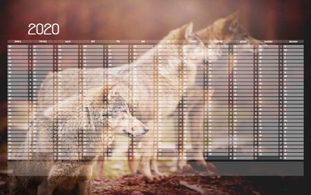 Yearly Wall Calendar Planner Template for Year 2020. As abckground is a pack of wolf in the autumn Forest watching something in the distance on the blurred background