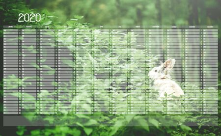 Yearly Wall Calendar Planner Template for Year 2020. White Bunny in the Frest. Фото со стока