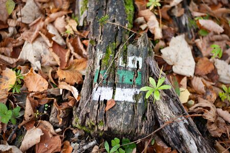 Green Czech touristic marking on old wooden stake.