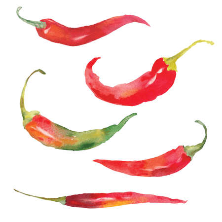 set of red chili pepper drawing by watercolor, hand drawn vector illustration  イラスト・ベクター素材