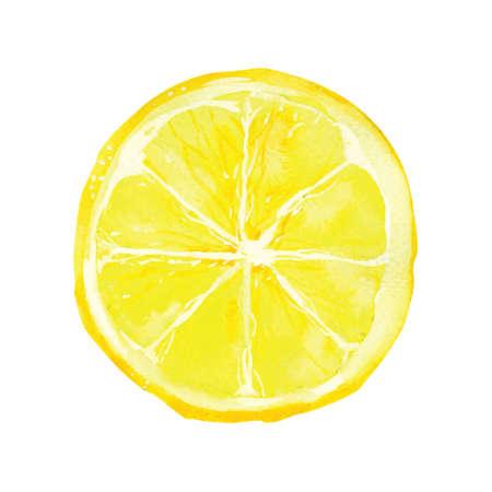 lemon: rebanada de lim�n por la acuarela dibujo, dibujado a mano ilustraci�n vectorial Vectores