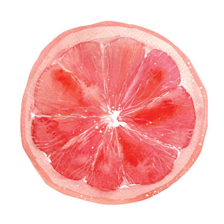 slice of grapefruit drawing by watercolor, hand drawn vector illustration