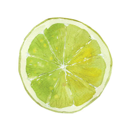 slice of lime drawing by watercolor, hand drawn vector illustration Фото со стока - 36985613