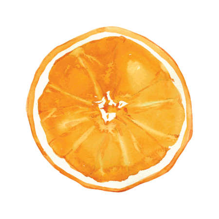 orange color: slice of orange drawing by watercolor, hand drawn vector illustration