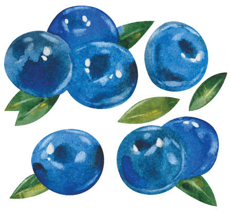 whortleberry: blueberries with leaves, watercolor illustration, vector Illustration
