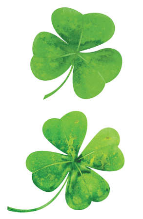 four: Clover leaves. Watercolor vector illustration. Illustration