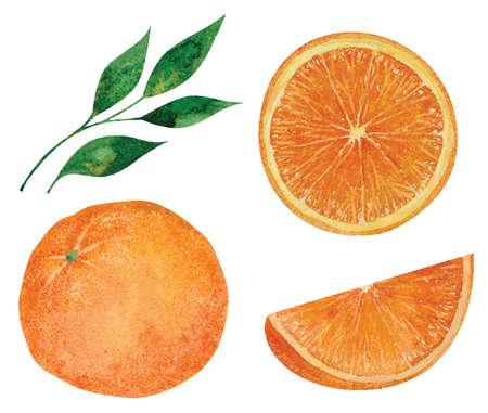 Set of hand drawn watercolor oranges. Vector illustration  イラスト・ベクター素材