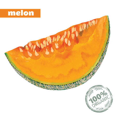 slice of yellow melon, vector  watercolor 向量圖像