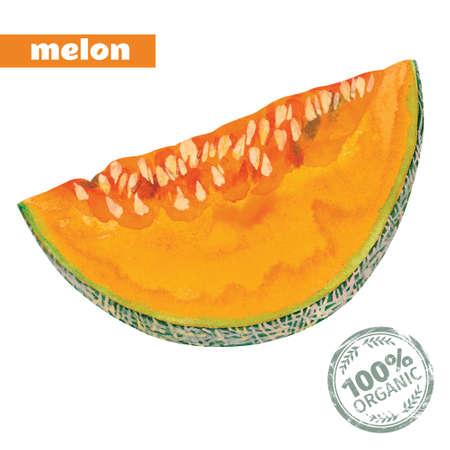 slice of yellow melon, vector  watercolor Illustration