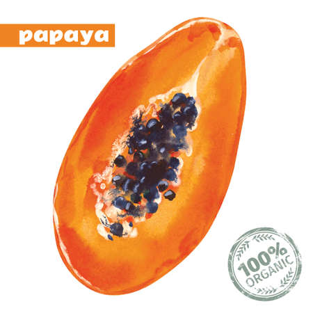 Watercolor papaya. Vector hand drawn illustration