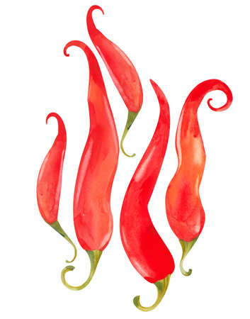 set of red chili peppers, watercolor illustration on white background