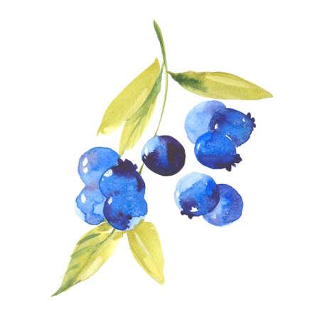 熟したブルーベリー、白い背景の水彩画のイラスト