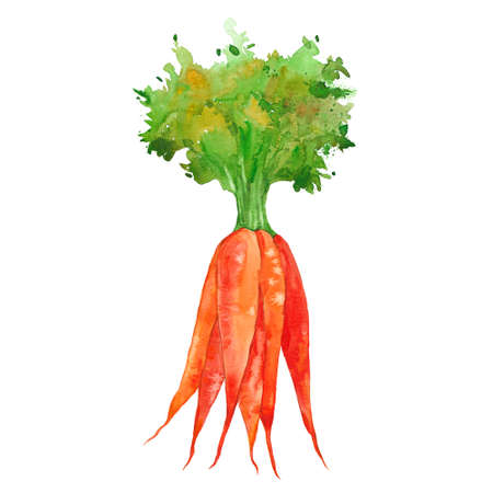 bunch of carrots, watercolor illustration  on white background 版權商用圖片