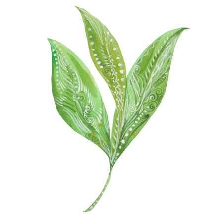 tea leaves: green tea leaves, watercolor illustration on a white background Stock Photo