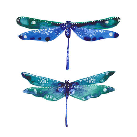 two dragonflies, watercolor illustration  on white background