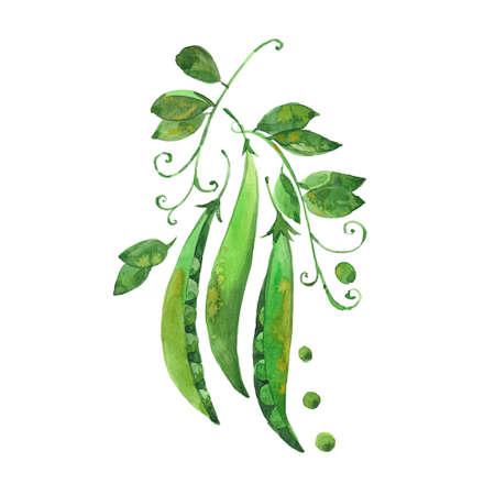 watercolor green pea Stock Photo