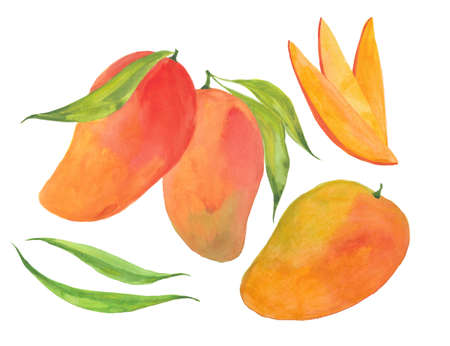 Mango set, watercolor illustration on white background
