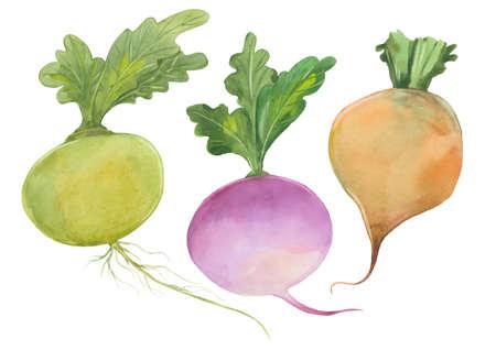 three turnips set
