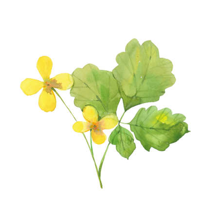 watercolor yellow celandine