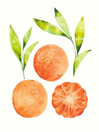 three tangerines with sprigs Stok Fotoğraf