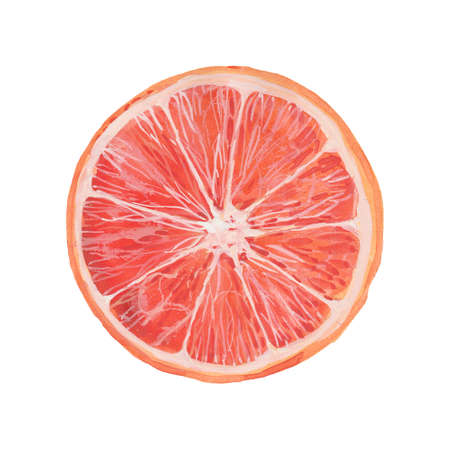 half a fresh juicy grapefruit, watercolor illustration  on white background