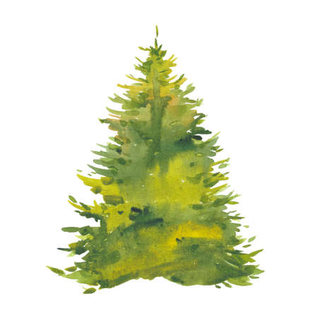 watercolor green spruce 写真素材