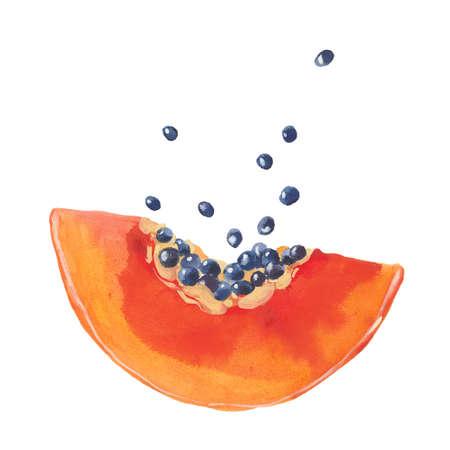 watercolor papaya slice