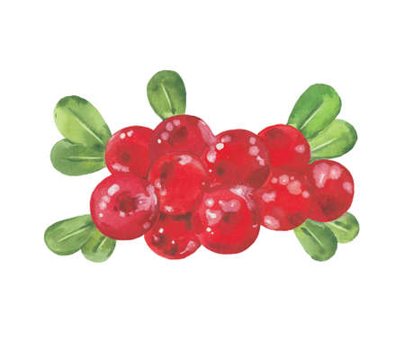 watercolor red cranberry