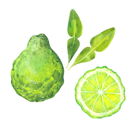 watercolor bergamot fruits