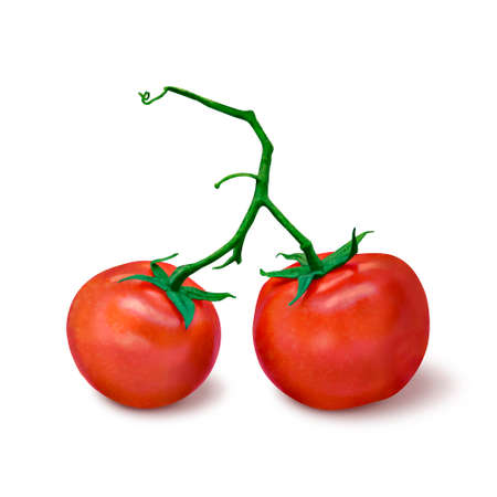 two tomatoes on a branch