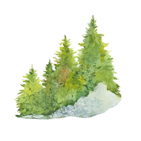 Coniferous forest. Hand drawn watercolor painting. Illustration on white background