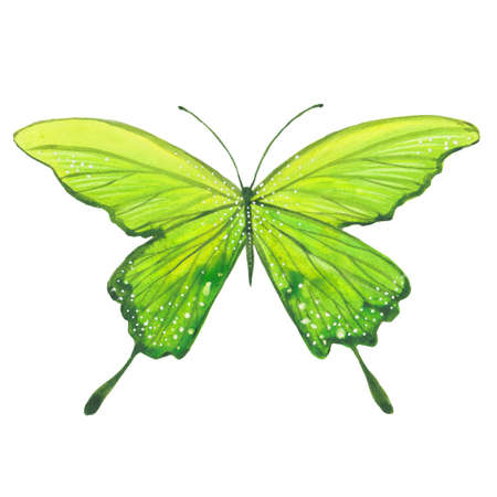 watercolor green butterfly