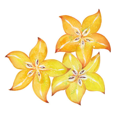 watercolor ripe carambola