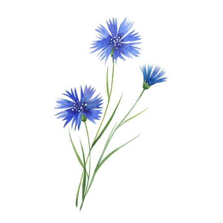 three cornflower flowers
