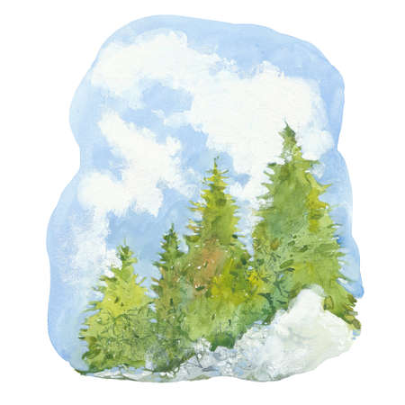 coniferous forest and sky