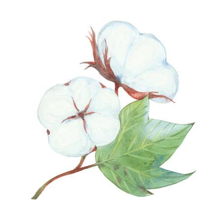 cotton branch with flowers Reklamní fotografie