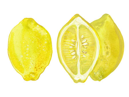 two whole lemons and a half, watercolor illustration on white background Stock Photo