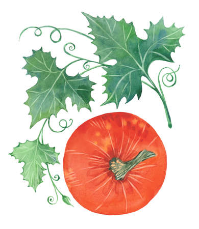 pumpkin with leaves