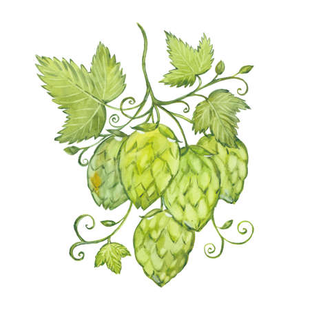 watercolor twig hops