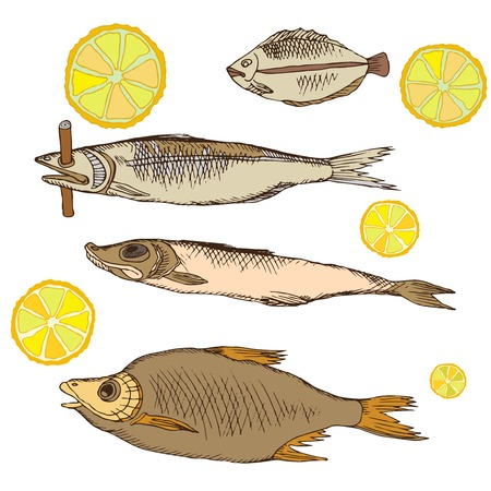 Snacks for beer, dry fish, a slice of lemon for food in the bath, bar, outside.. Hand drawing in sketch style. Isolated object on white background