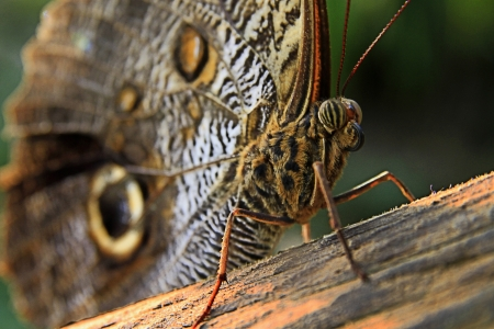 butterfly eyes Stock Photo - 17964706