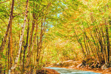 everyday scenes: Forest in the Autumn Stock Photo