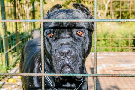 left behind: Sad dog left behind