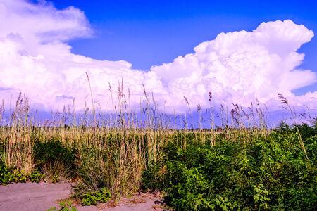everyday scenes: Vegetazione sulla spiaggia in Montenegro
