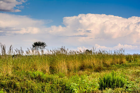everyday scenes: Vegetation by the beach in Montenegro Stock Photo